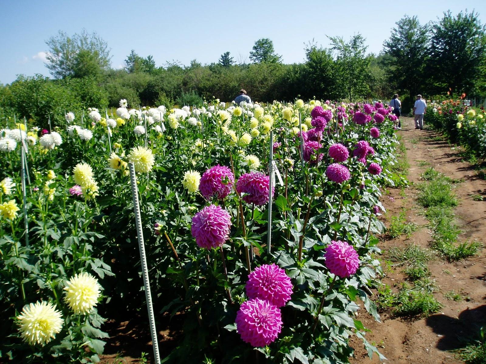 Цветы для открытого грунта в сибири фото