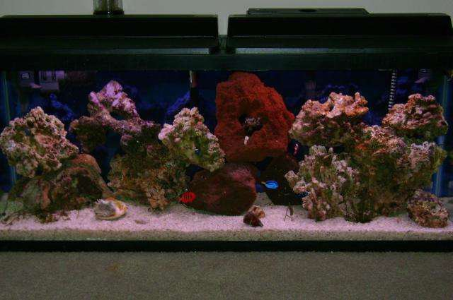 Types of fish tanks you can have about pet animals and for Types of fish tanks