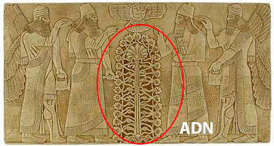 ADN extraterrestre annunaki