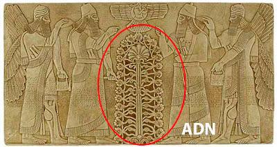 ADN extraterrestre annunaki