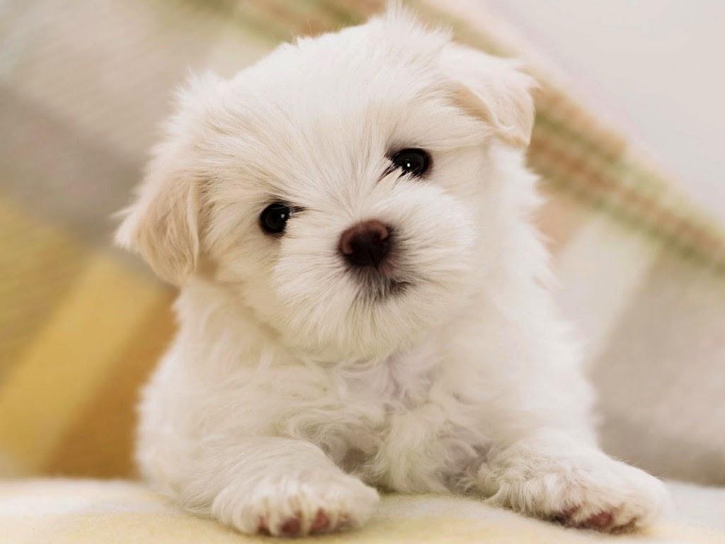 Como dar vermífugo para cachorros