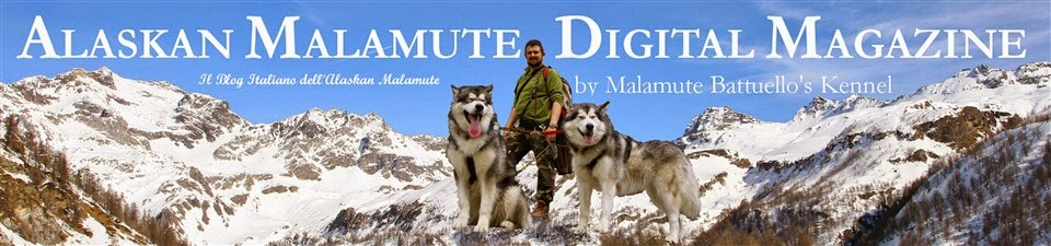 Alaskan Malamute Digital Magazine by Malamute Battuello's Kennel