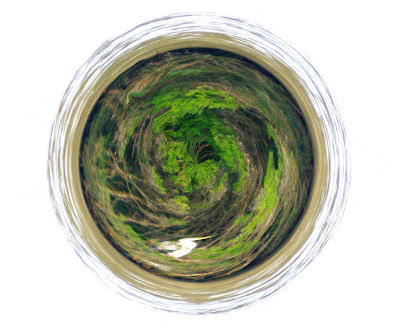 tiny planet created via a polar transformation