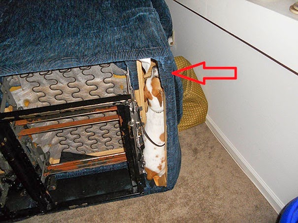 dog caught underneath sofa