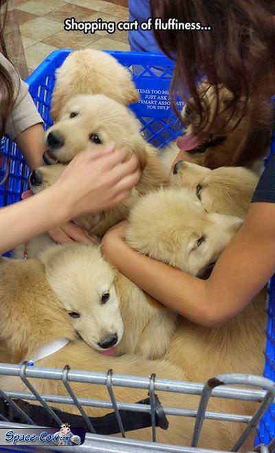funny cute puppies pics