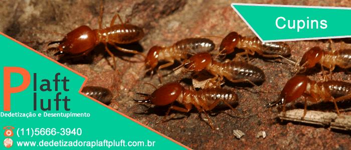 Cupins - Problemas para sua casa - Dedetização - Controle de Cupins - São Paulo - Dedetizadora Plaft Pluft