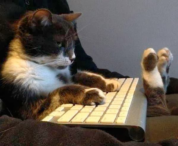 Funny cats - part 89 (40 pics + 10 gifs), cat sits like human with keyboard on his lap