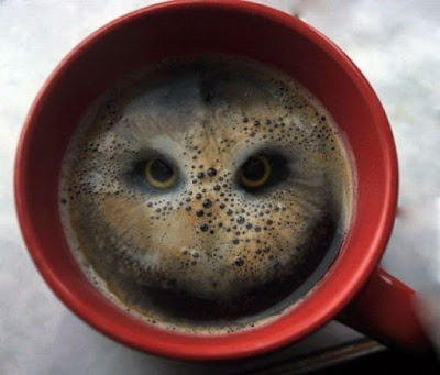 Coffee, Café, Mocho, Coruja