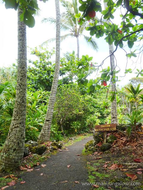 Maui Jungalow