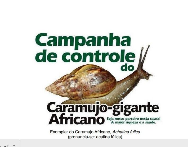 CAMPANHA DE CONTROLE DO CARAMUJO GIGANTE AFRICANO