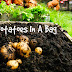 Step By Step Guide To Growing Potatoes In A Bag