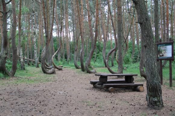 لغز حير العلماء: غابة الأشجار