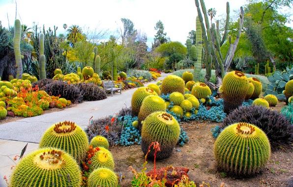 Cactus Imagenes de Jardines muy Coloridos