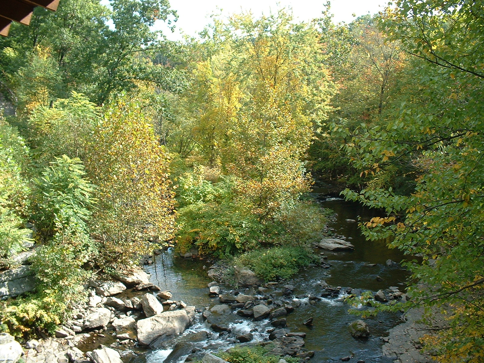 Frank's Place: Roaring Brook