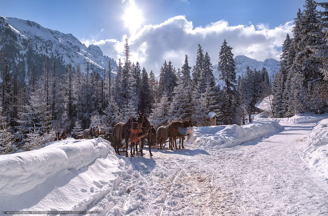 Resting horses on a way to Morskie Oko