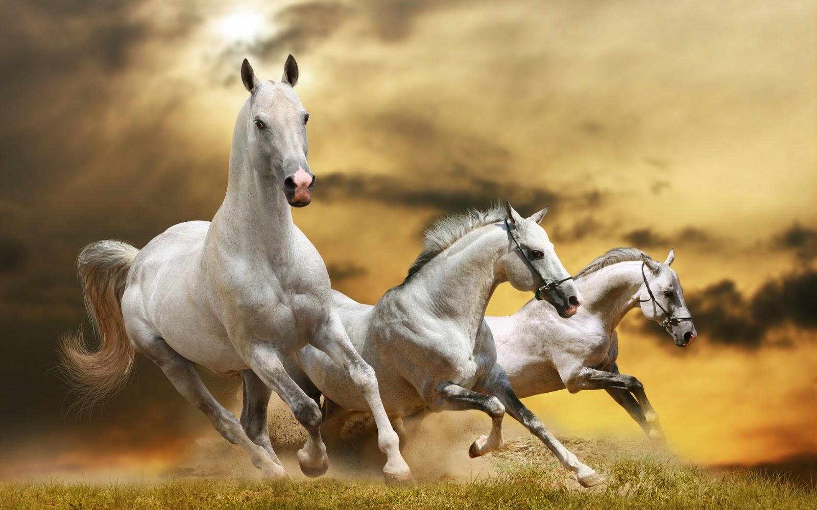 BANCO DE IMÁGENES: Caballos salvajes de color blanco - Wild white horses