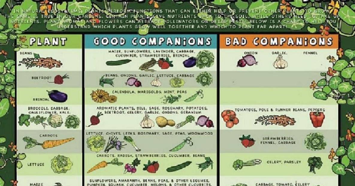 C4 Ca Creative Alchemy Gardening Companion Planting Chart