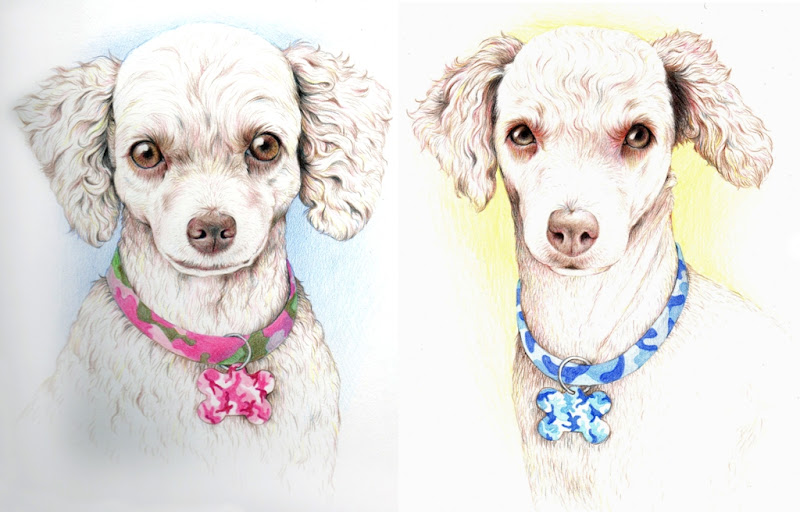 custom drawn portraits of two apricot colored toy poodles, one with a pink camouflage collar and tag, the other with blue camouflage collar and tag, both have very intelligent and sparkly eyes