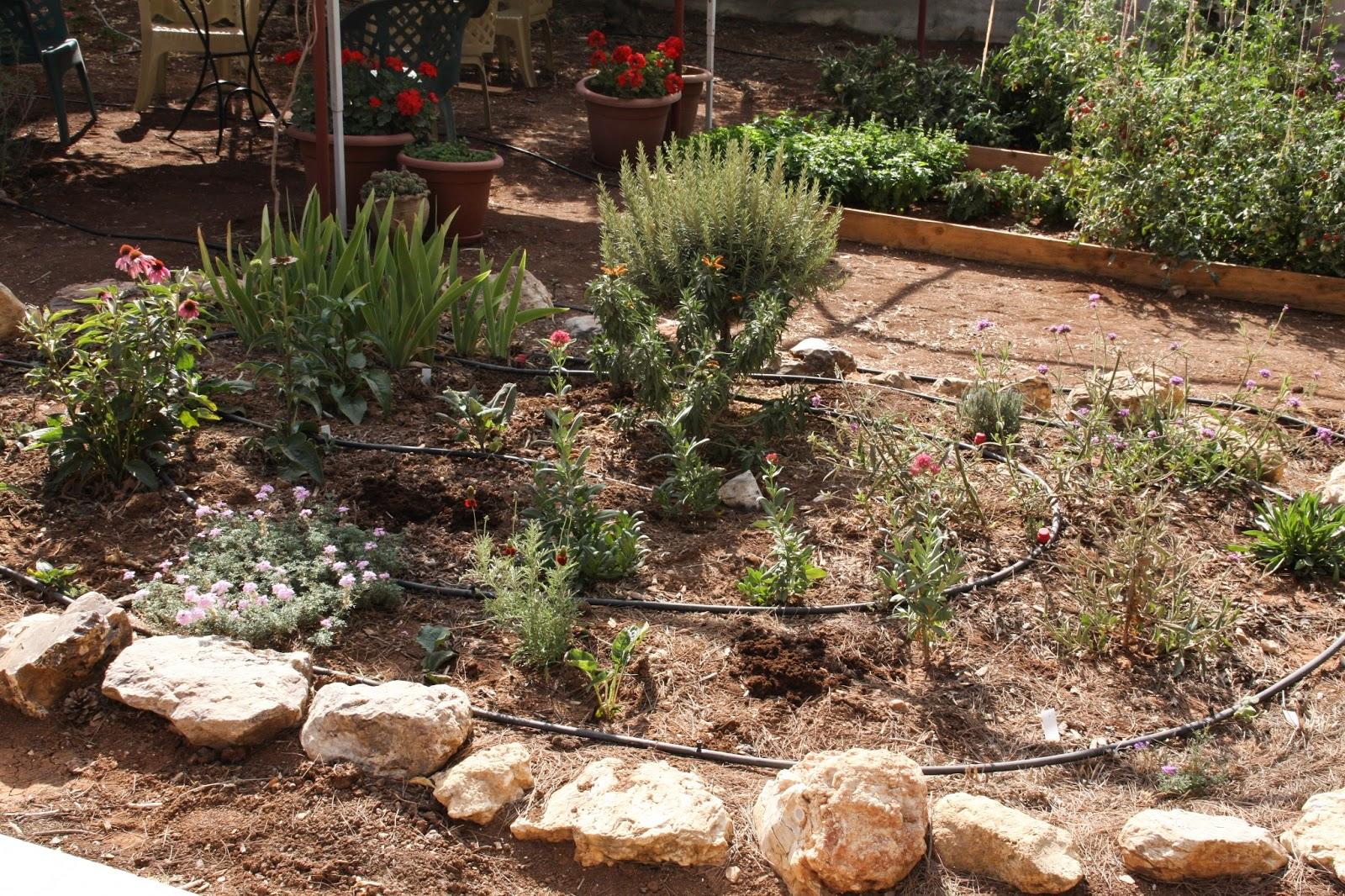 Quotidian Life: Garden Journal~July 2013