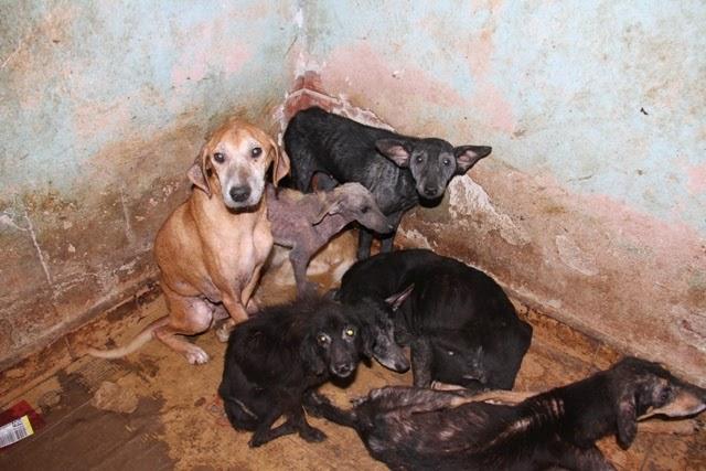 HOLOCAUSTO ANIMAL EM CANANEIA