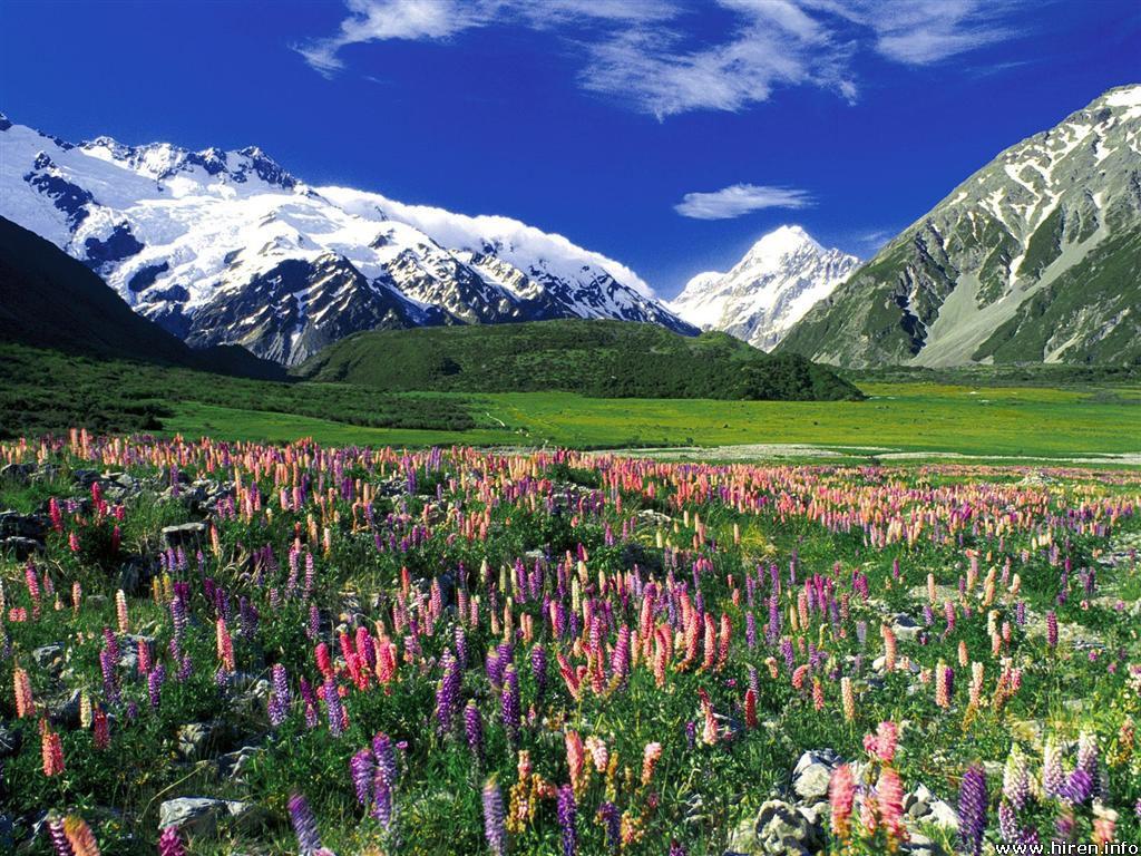 http://1.bp.blogspot.com/-3SnP6s8Mpnw/TdPkylrZn6I/AAAAAAAAPG0/4OHKjAxJRX8/s1600/Spring_Meadow%252C_New_Zealand_Wallpaper_kbgds.jpg