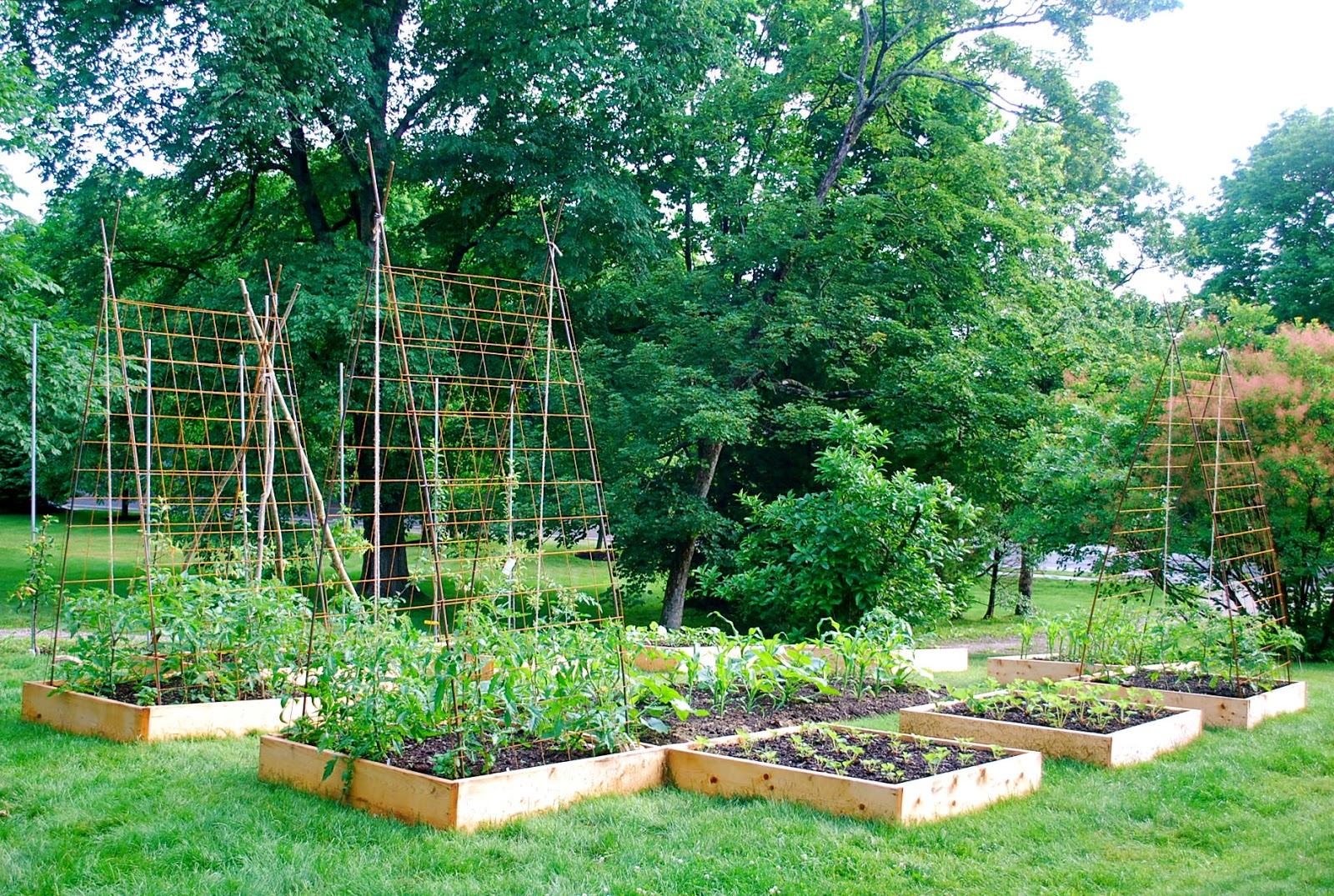 seeding the good life building tomato trellises from plans building trellis pdf woodworking