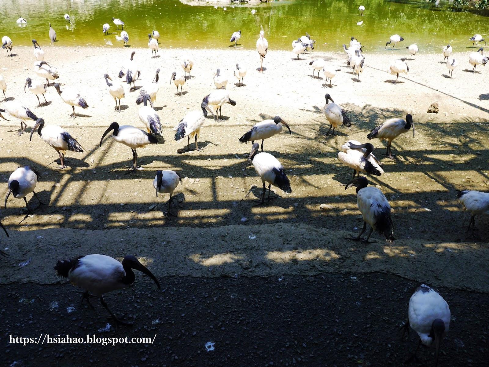 沖繩-景點-名護-名護自然動植物公園-neopark-ネオパークオキナワ-推薦-親子-自由行-旅遊-Okinawa-Nago
