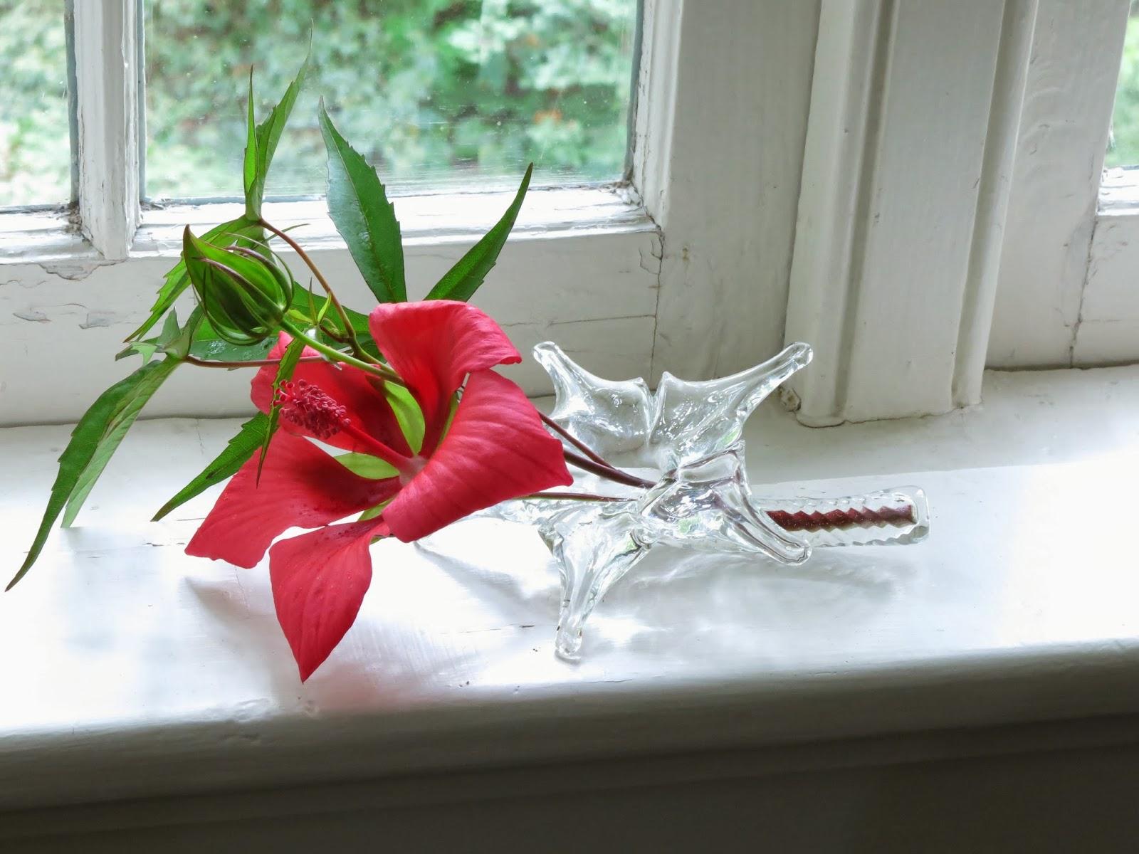 Windowsill Arranging Hibiscus In Hibiscus Holder