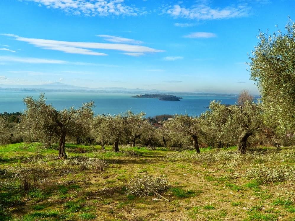 Potatura di ulivi nei  pressi del Lago Trasimeno