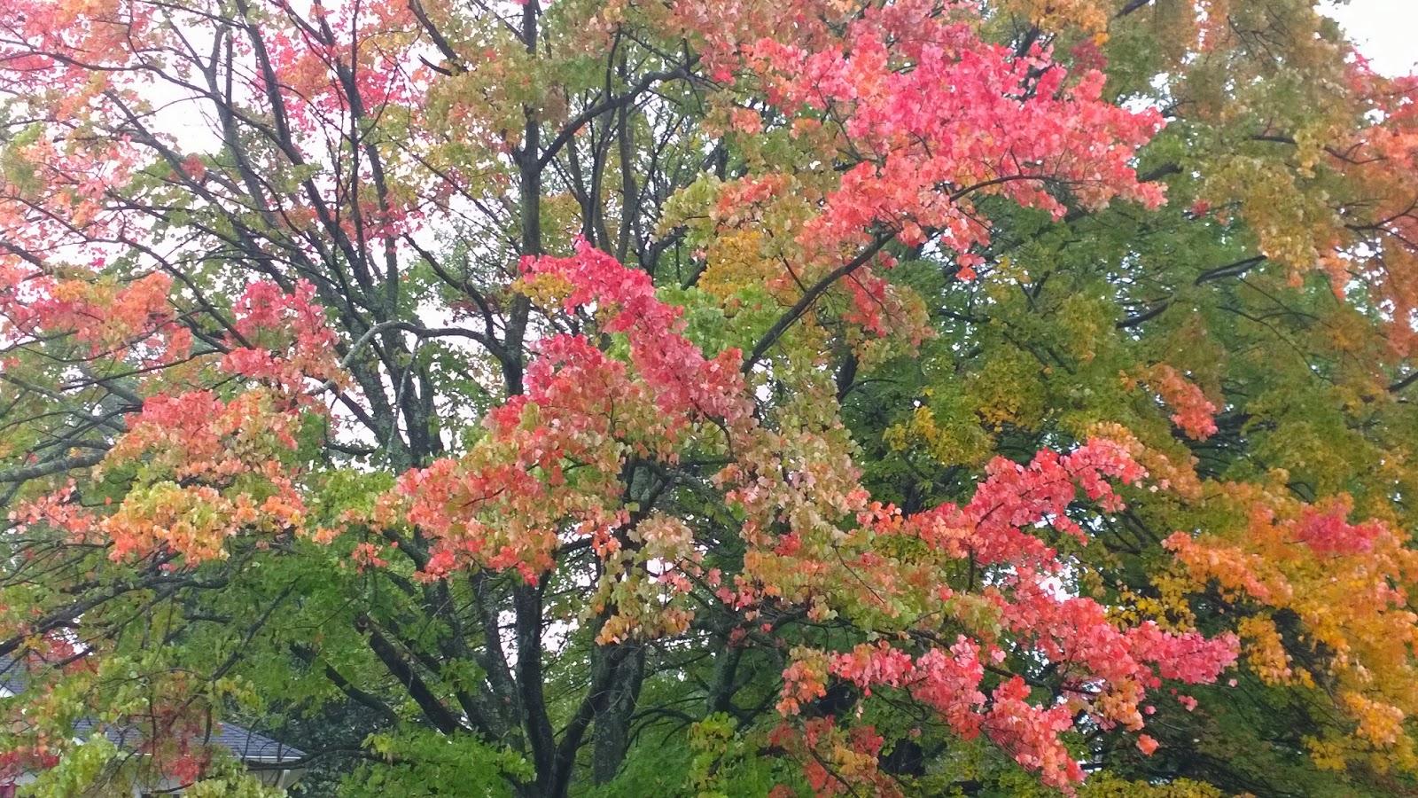 Avonturen vanuit ons hoekje van de wereld de herfst in huis brengen - Doos huis wereld ...
