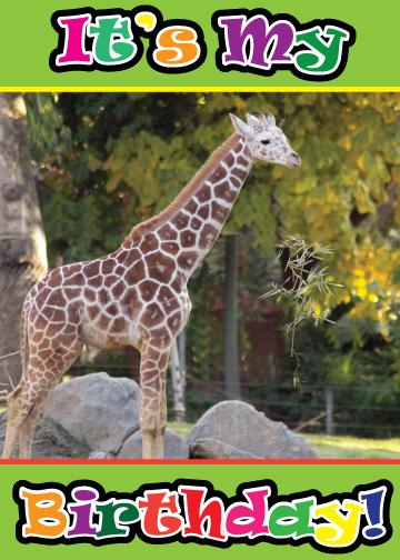 Fresno Chaffee Zoo July 2011