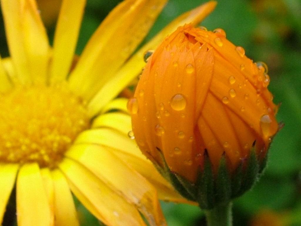 http://1.bp.blogspot.com/-3U0G4_KiiZY/TnuYOS5AQpI/AAAAAAAAEOE/QJmYYd6uZgs/s1600/orange-flower.jpg