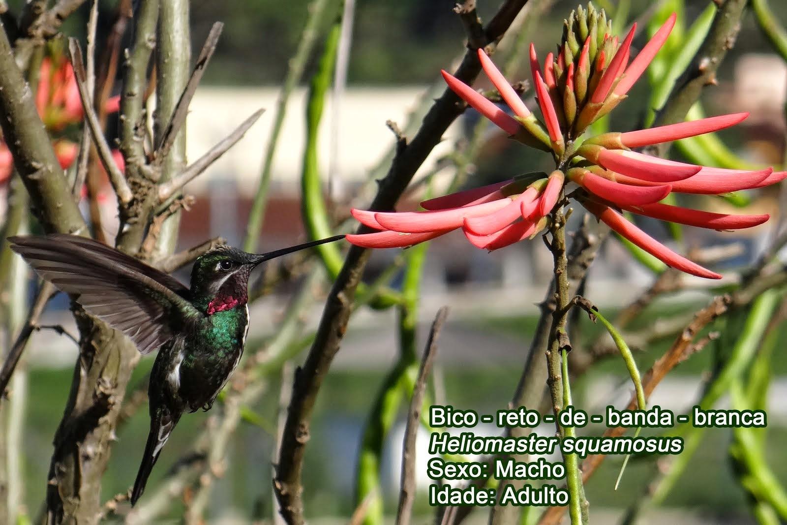 Beija-flores de Arceburgo - Numero 9