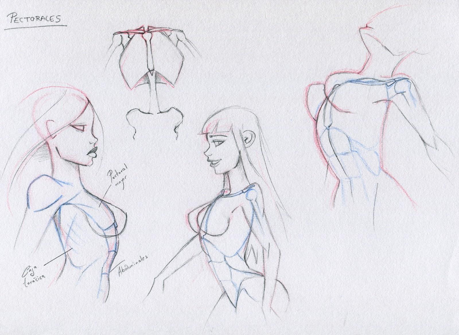 Draw In!: Anatomía I