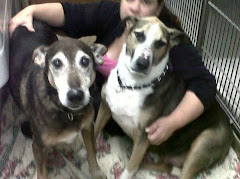 UPDATE11/25/11 2  2 Seniors,  Owner Died. Need Loving Home Long Island, NY