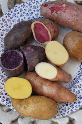 Golden wonder, Orla, Salad Blue, Highland Burgundy, Mayan Gold, Pink Fir apple, potatoes