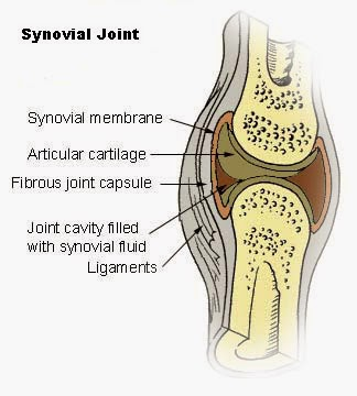 How To Increase Synovial Fluid In Knee
