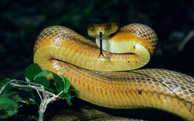 snake wallpaper dangerous - photo #39