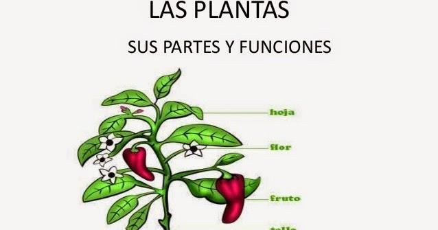 Las plantas y sus partes las plantas for Funcion de las plantas ornamentales