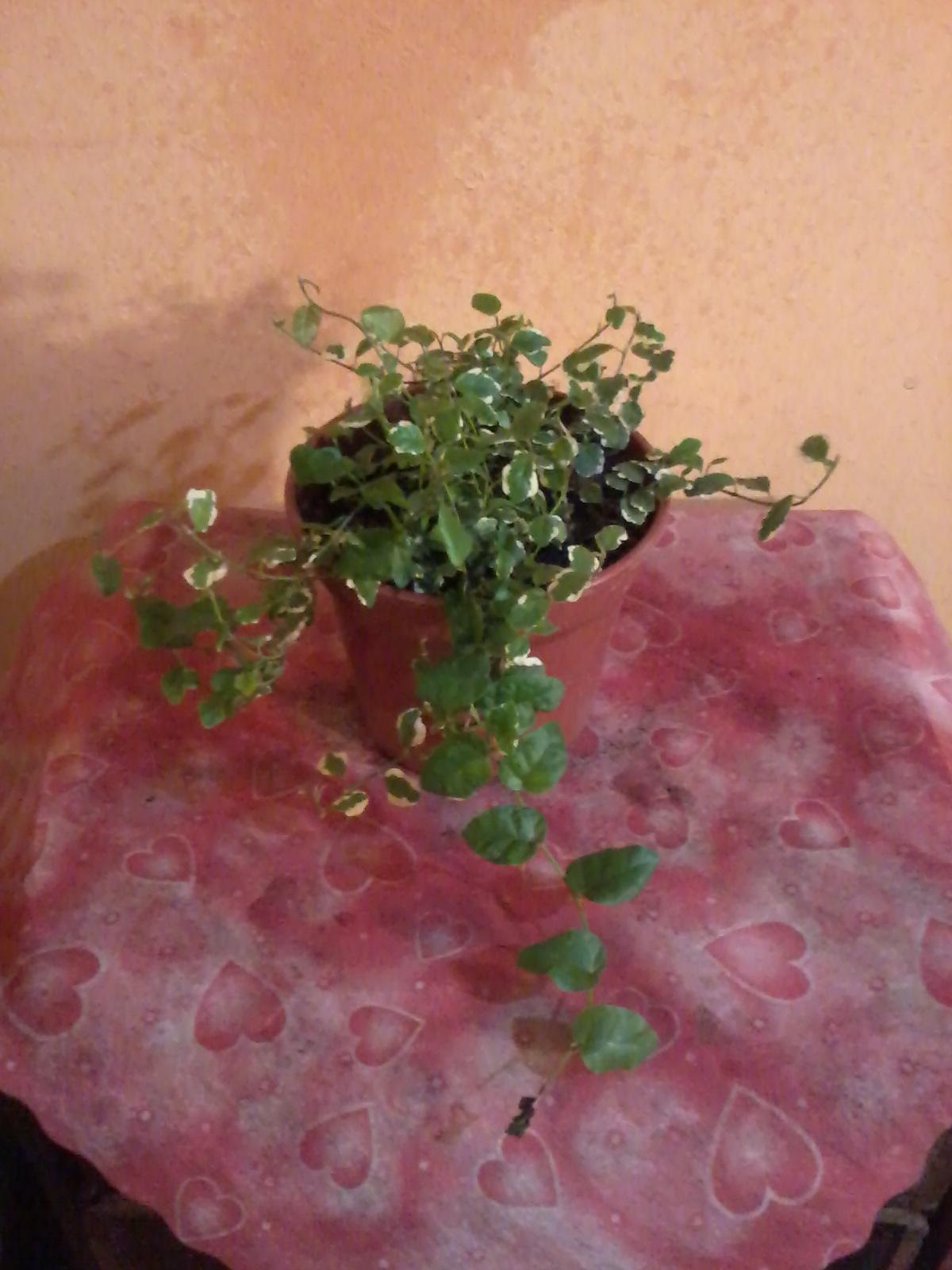 plantas decorativas plantas peque as
