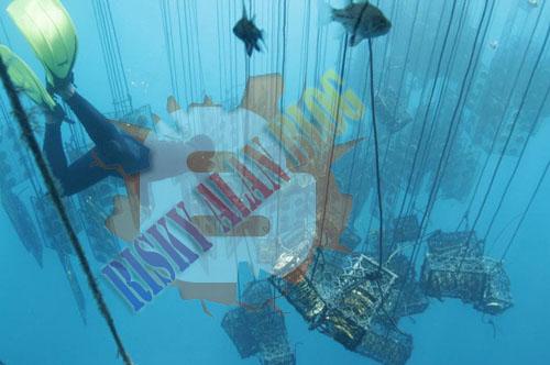 Inilah Mutiara Emas Yang Langka Dari Filipina [full Pict] [ www.BlogApaAja.com ]
