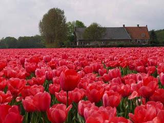 اجمل معالم هولندا السياحية