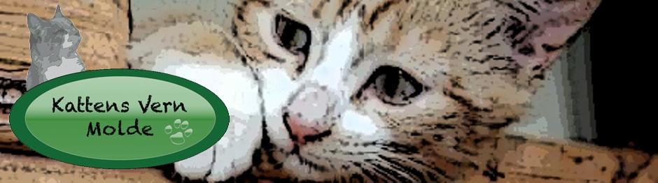 Kattens VERN Molde