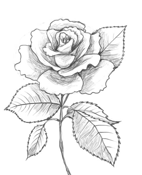 Line Drawing Of Rose Flower : Rose and heart drawing printable coloring of valentine