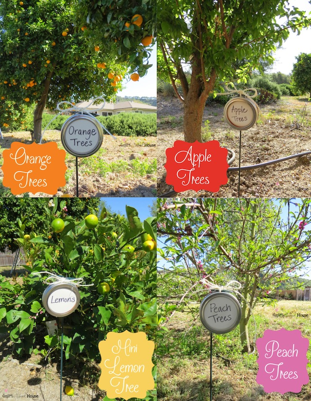 DIY Mason Jar Lid Tree Markers Project