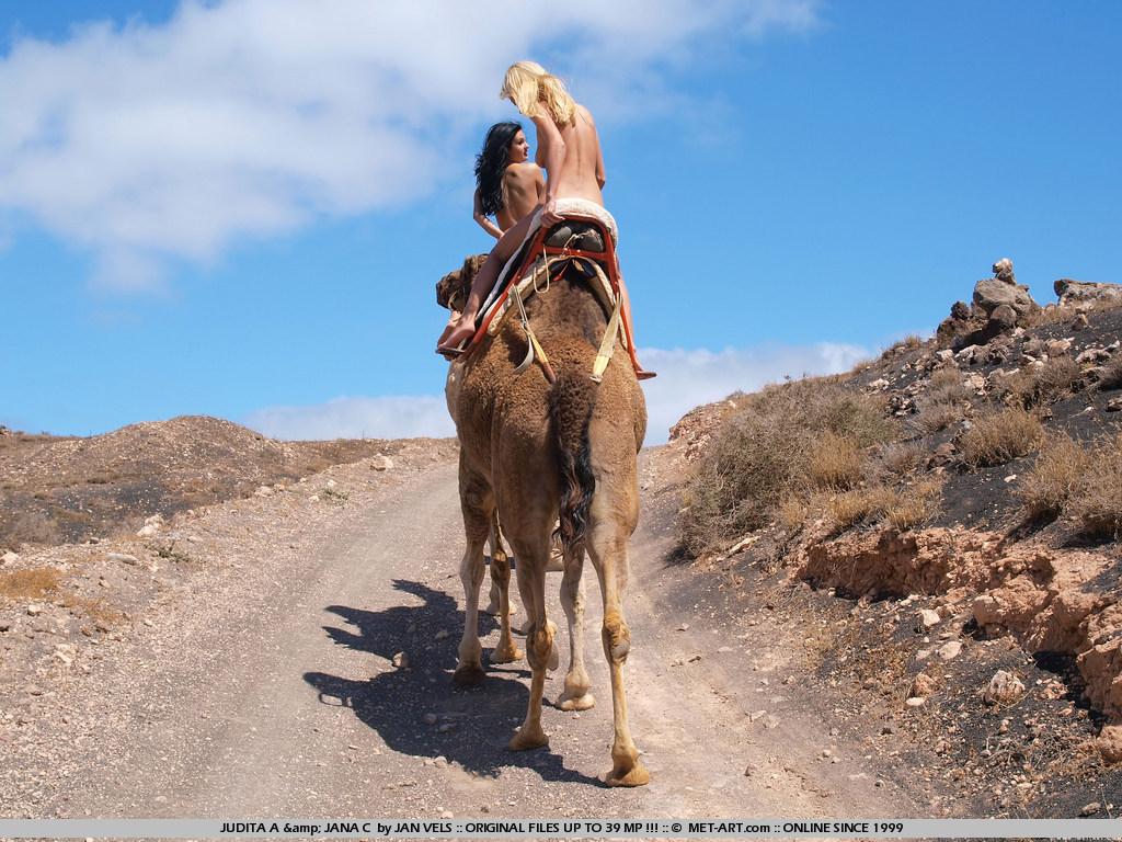 Секс с верблюдом 12 фотография