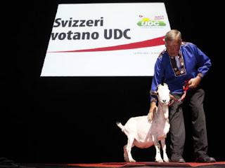 Талисманом одной из крупнейших национальных партий Швейцарии SVP (Швейцарская Народная Партия) является беленький козлик по имени Зоттель.