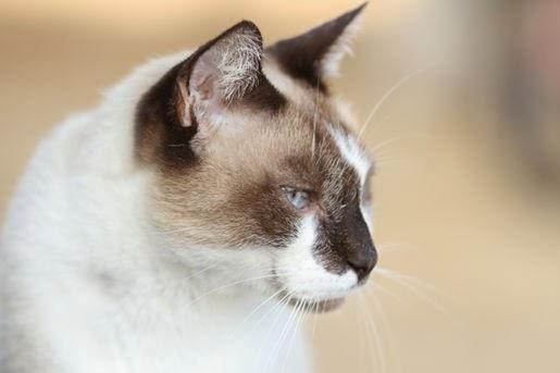 Zbrylające się żwirki silikonowe Nullodor Color dla kotów