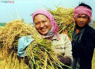Hủy dịch vụ Nhà nông xanh của Mobifone