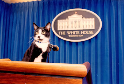 Cat Standing on the Press Podium at the White House stock photos